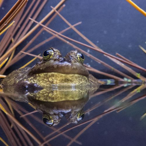 aquarium 1 toad reflection