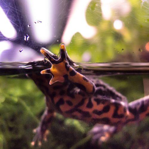 aquarium 5 frog hand