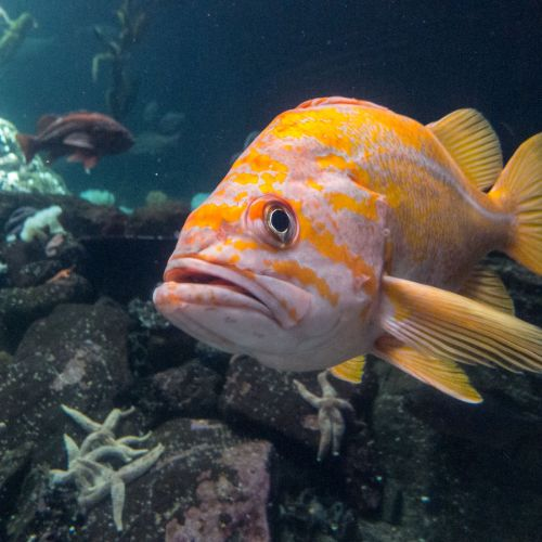 aquarium 6 fish 2