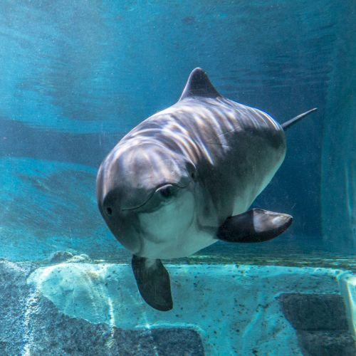 aquarium 8 porpoise