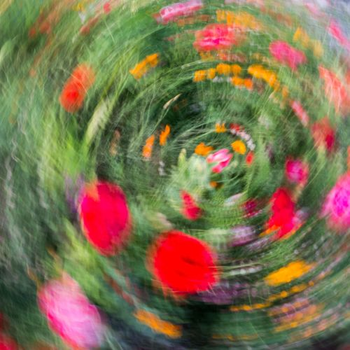 abstract flora 1