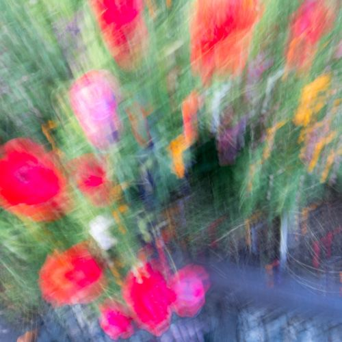 abstract flora 2