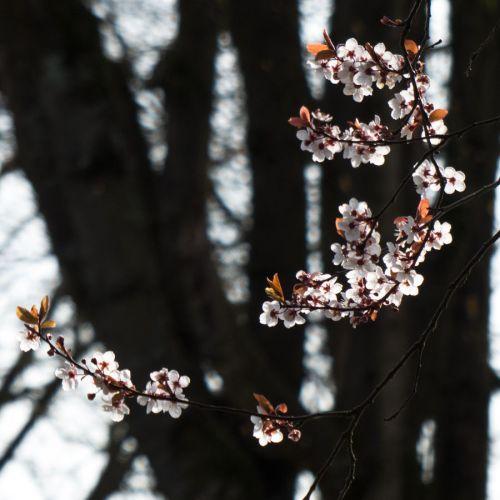 flora march 2014 1
