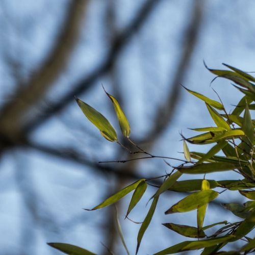 flora march 2014 2