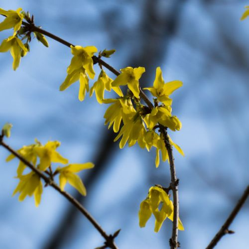 flora march 2014 4