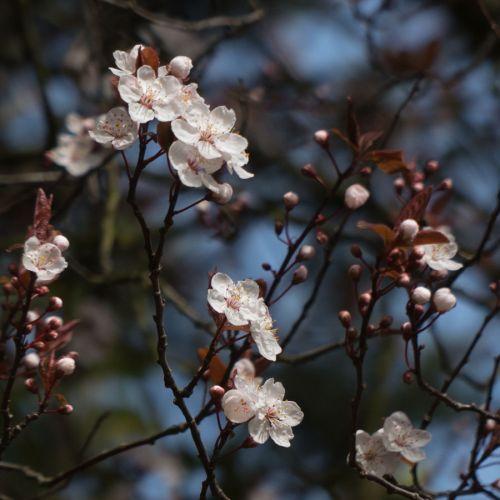 flora march 2014 5
