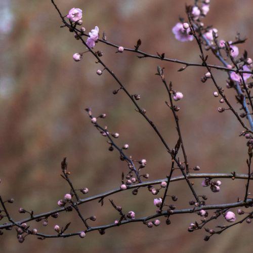 flora march 2014 6