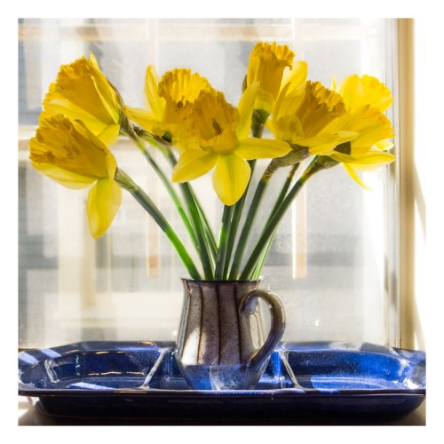 daffodils on windowsill