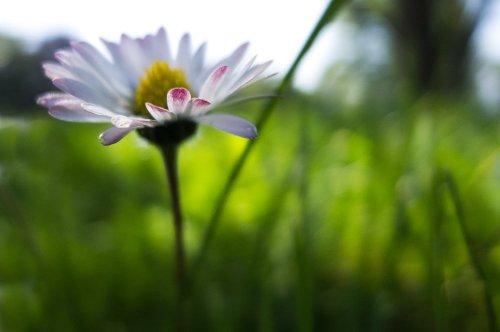 fleur apres midi