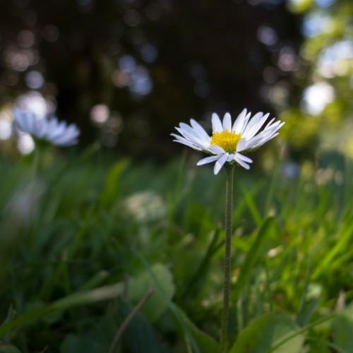 fleur au parc