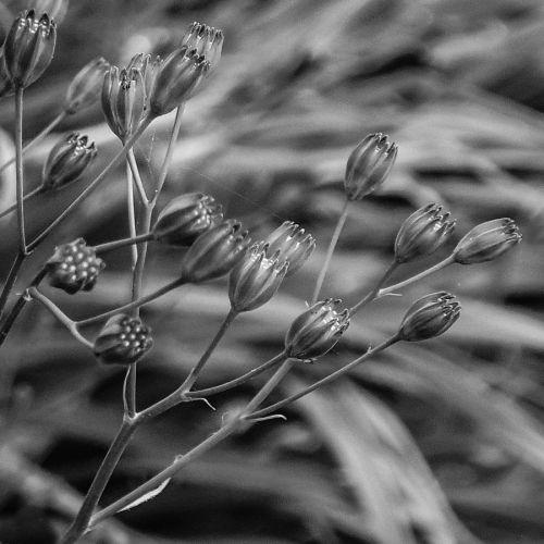 mono flora 2014-07-06