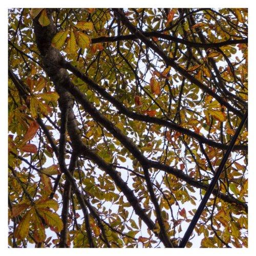 arbre 30 aout chez christine