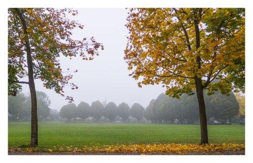 automne 2013