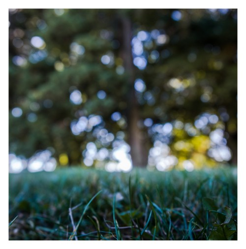 s etendre sur l herbe