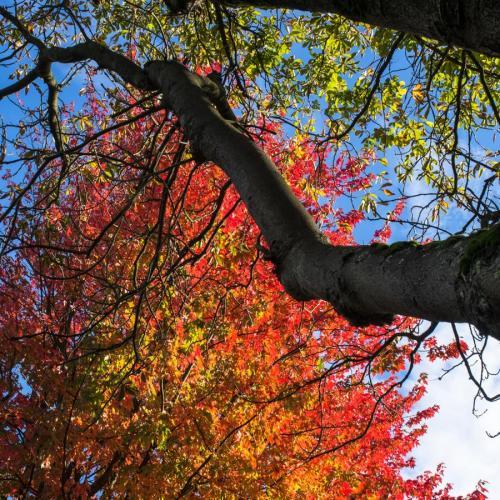 couleurs d'automne 1