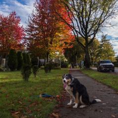 couleurs d'automne 5