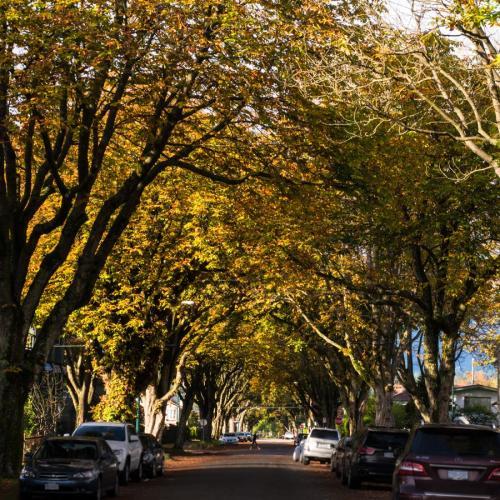 couleurs d'automne 6