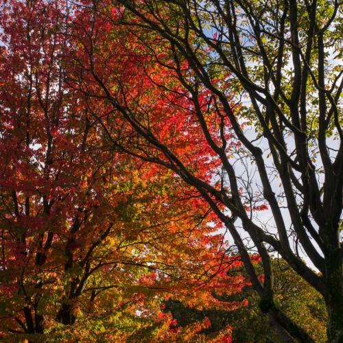 couleurs d'automne 7