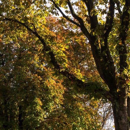 couleurs d'automne 8