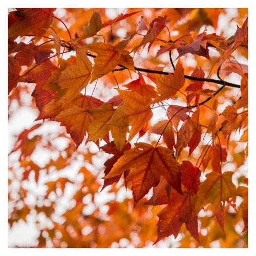 feuilles d'automne-2