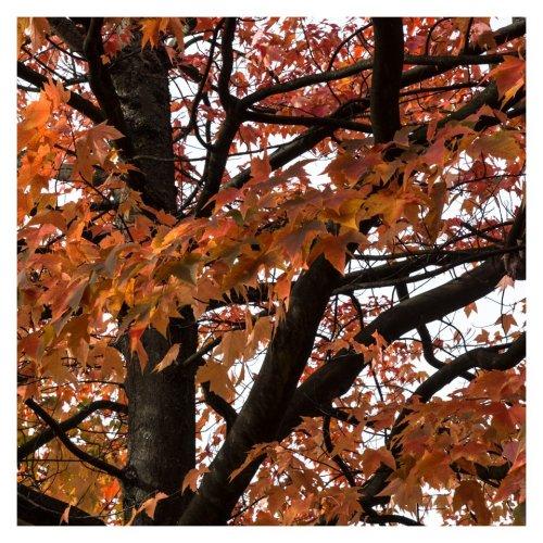 feuilles d'automne-3