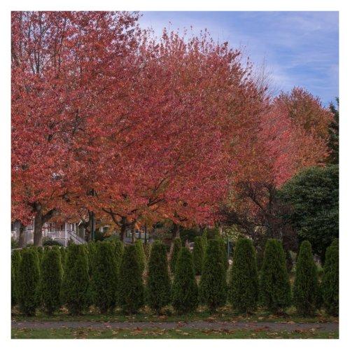 l'automne dans le quartier-4