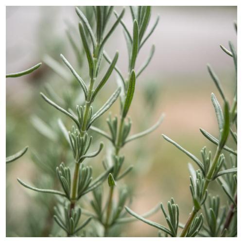 plante 2014-09-22