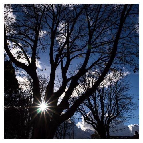 soleil arbres