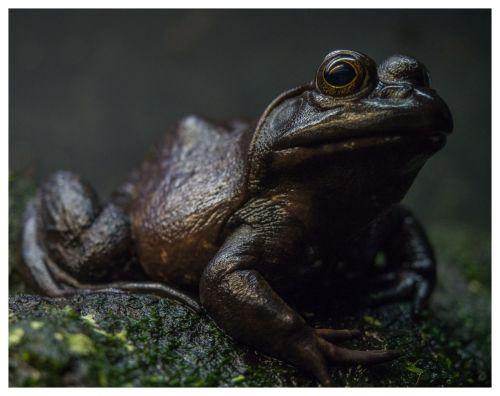 aquarium frog 02