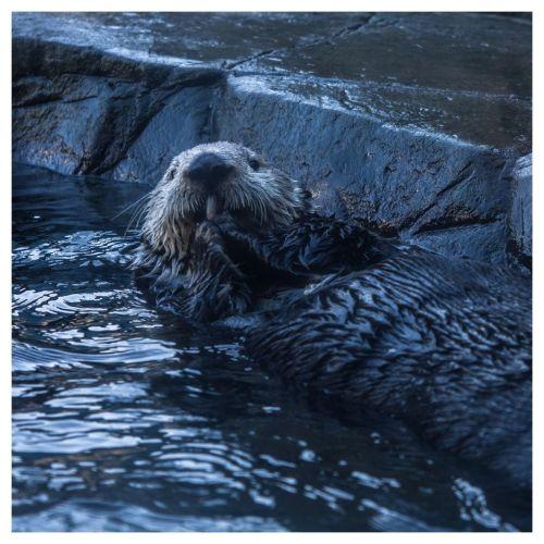 aquarium otter 02