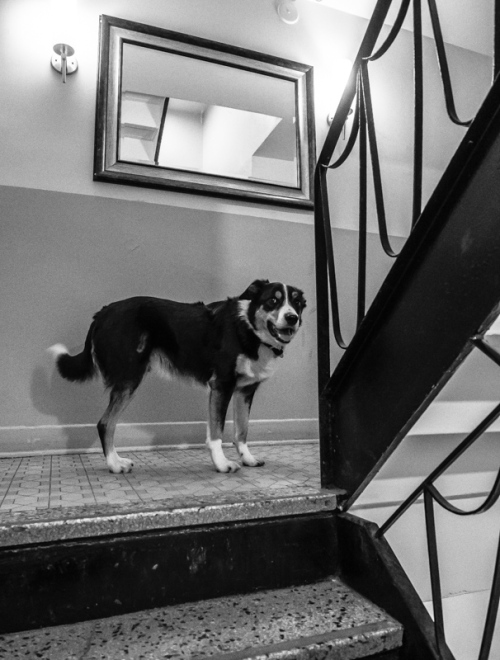 max dans l'escalier