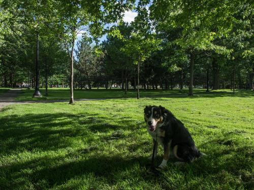 max parc lafontaine