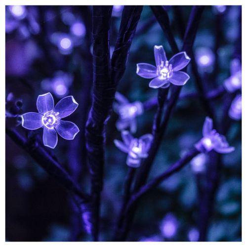 lumieres en fleur