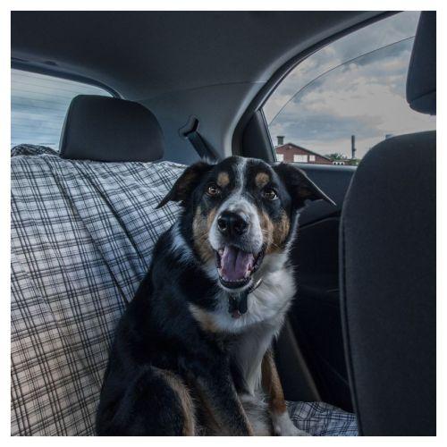 Max dans l'auto
