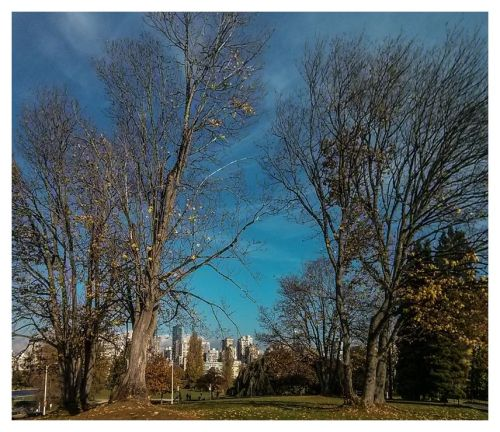 2015-10-22 vanier park-1