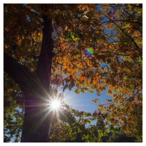 automne 2015 vancouver