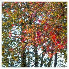 automne octobre 2015-2