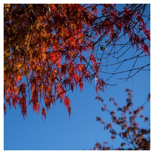 automne 2015-11-09 #03