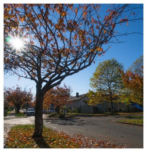 automne 2015-11-09 #04