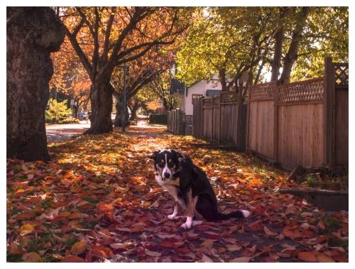 automne 2015-11-09 #08
