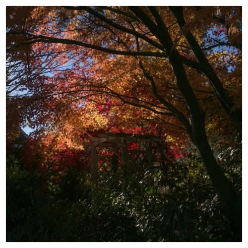 automne 2015-11-09 #09