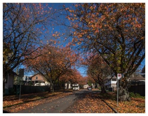 automne 2015-11-09 #11
