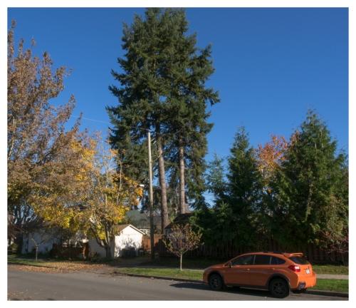 automne 2015-11-09 #12