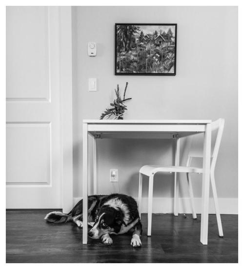Max sous la table