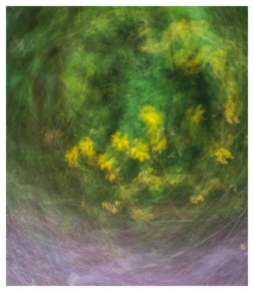 Whistler 19