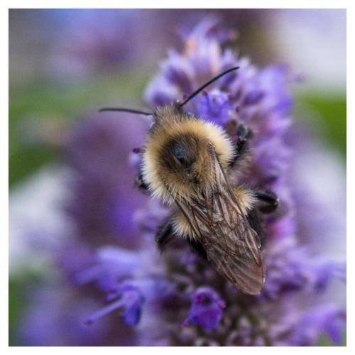 abeille-2016-09-19-1