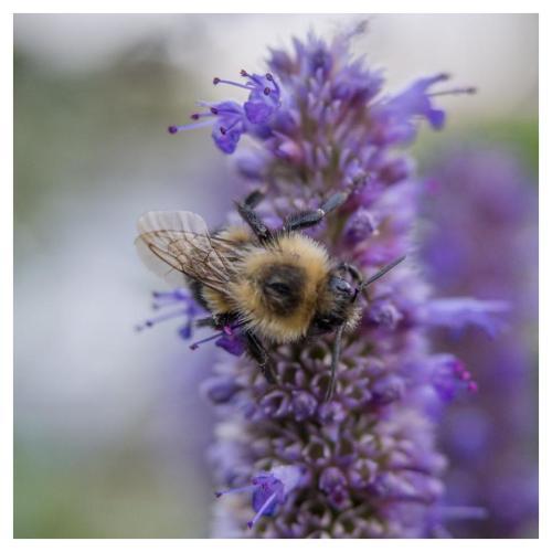 abeille-2016-09-19-2