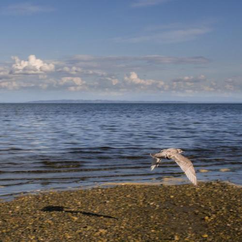 centennial-beach-02