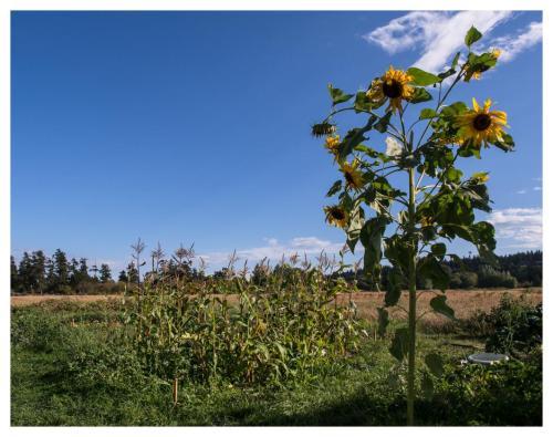 delta-community-farm-06
