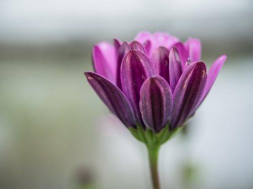 fleur-a-2